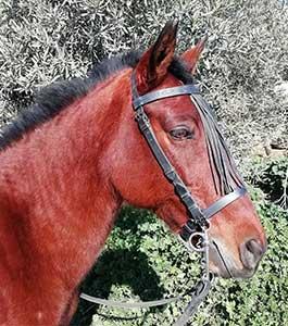 Horse Riding holiday europe horse trekking Malaga Andalucia Spain riding holidays El Chorro Spain