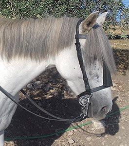 Horse Riding spain horse trekking holidays Europe Malaga Andalucia Spain riding holidays El Chorro Spain