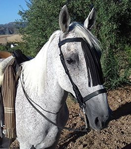 Horse Riding Spain - Inca Horse pictures - horse trekking riding holidays Spain