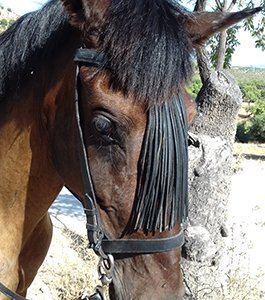 Horse Riding Europe - Rocio Horse pictures - horse trekking riding holidays Europe
