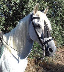 Horse Riding El Chorro spain horse riding holiday spain riding holidays horse riding holiday Malaga Andalucia Spain riding holidays Andalucia El Chorro