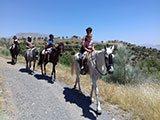 trekking holiday Malaga Andalucia Spain Horse Riding Andalucia Horse Riding Holidays in El Chorro horse treks